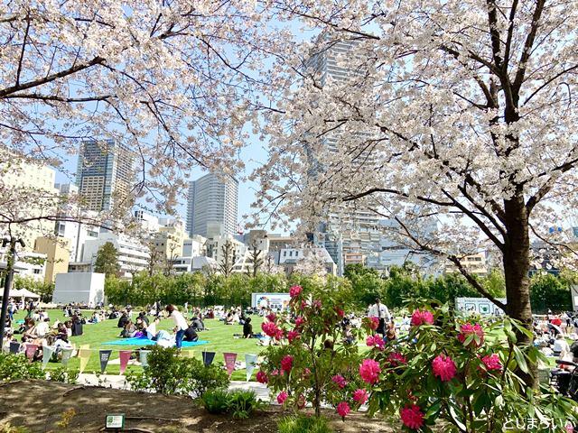 南池袋公園の桜