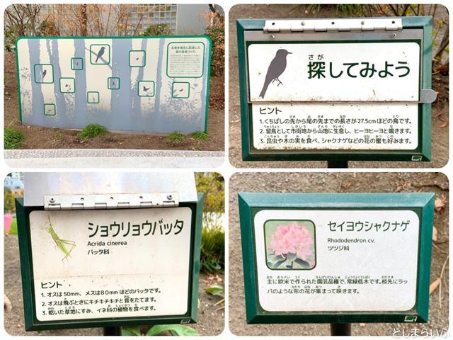 南池袋公園の植物や生き物
