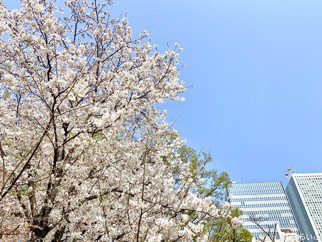 南池袋公園 桜とビルと青空