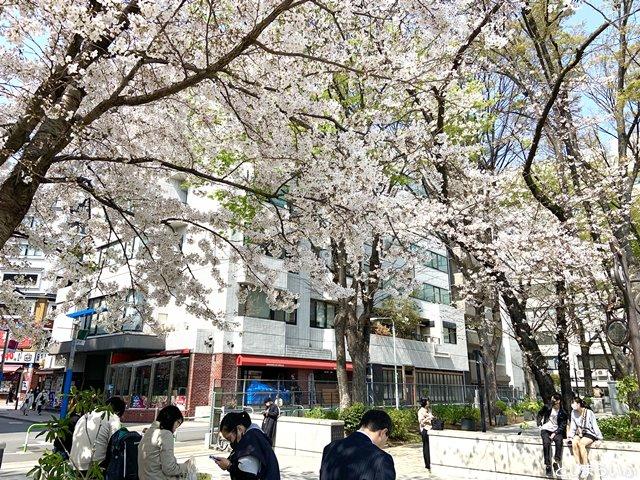 南池袋公園の入口近くの桜