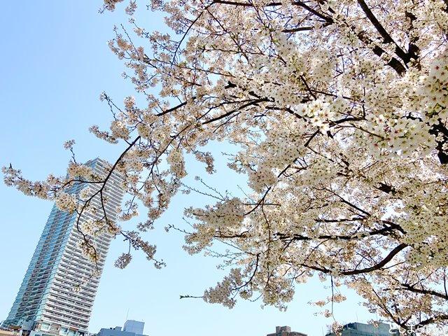 南池袋公園 桜の枝