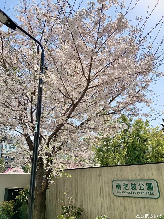 南池袋公園 グリーン大通り側の桜