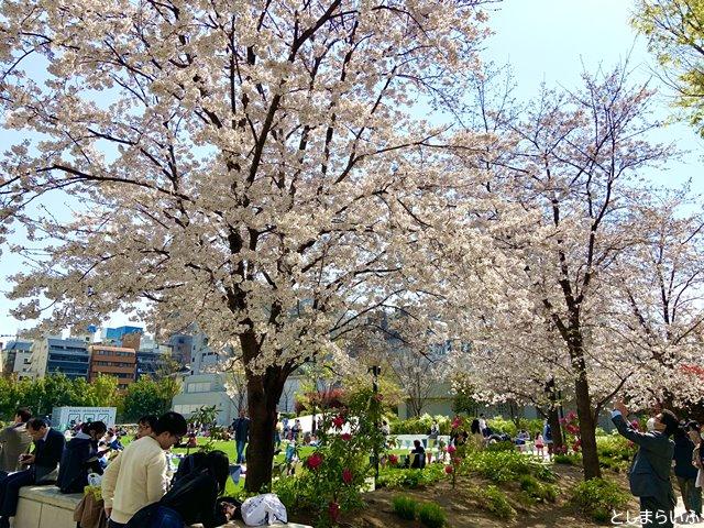 南池袋公園 桜が満開