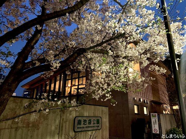 南池袋公園 グリーン大通り側の夜桜