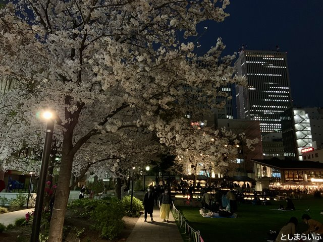 南池袋公園 夜桜