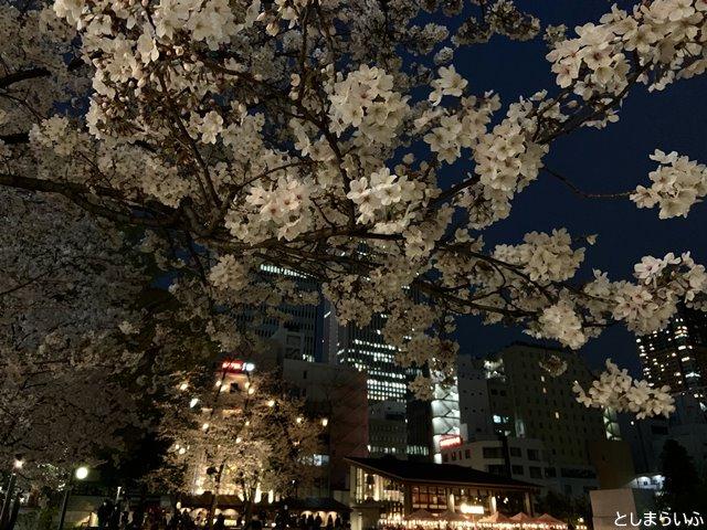 南池袋公園 夜桜ライトアップ