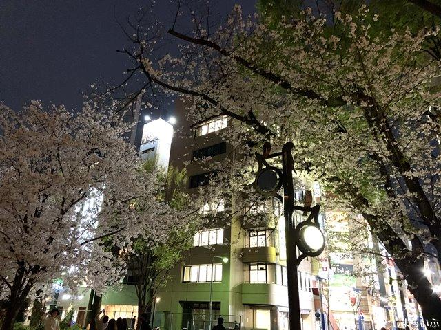 南池袋公園 夜桜 花見