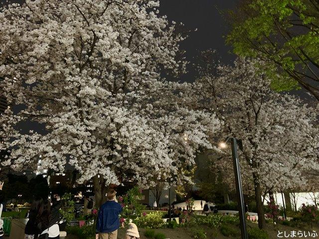 南池袋公園 満開の夜桜
