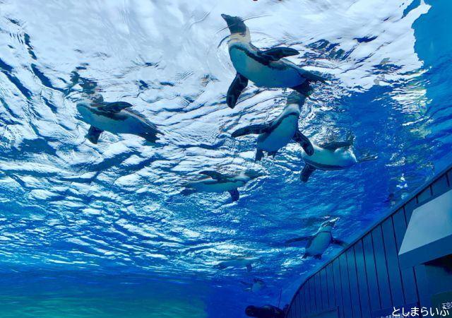 サンシャイン水族館 空飛ぶペンギン